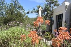 garden around  terrace